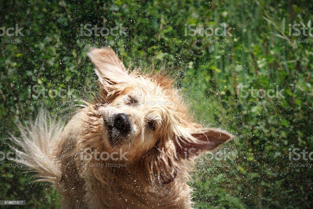 Splashing Around stock photo