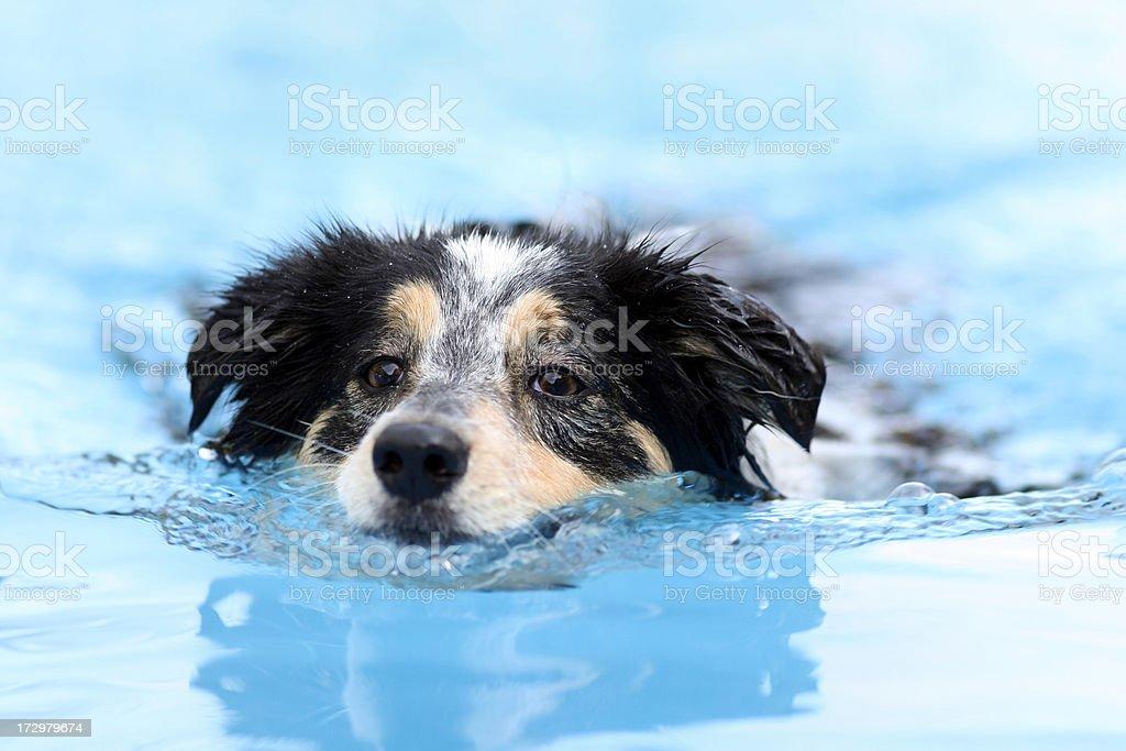 Splashing fun series - Border Collie stock photo