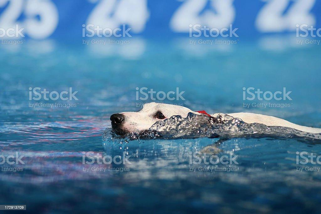 Splashing Fun Series: Performance Swim royalty-free stock photo