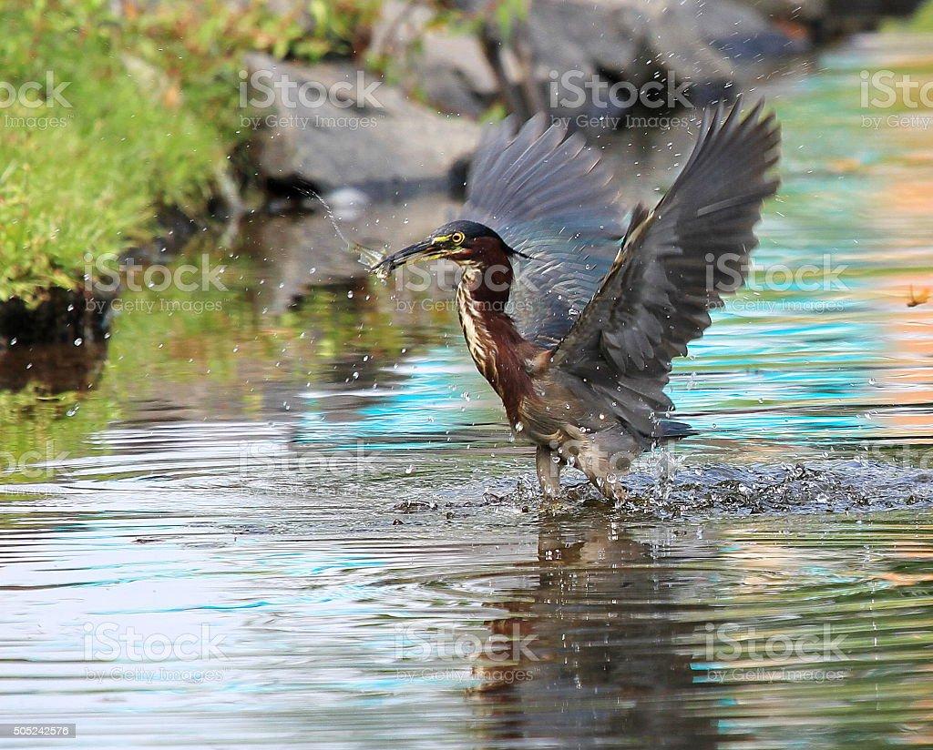 Splashy Catch stock photo