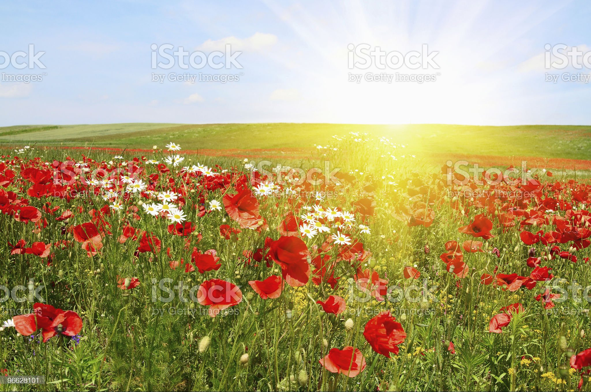 Splendid sunset over green meadow. royalty-free stock photo