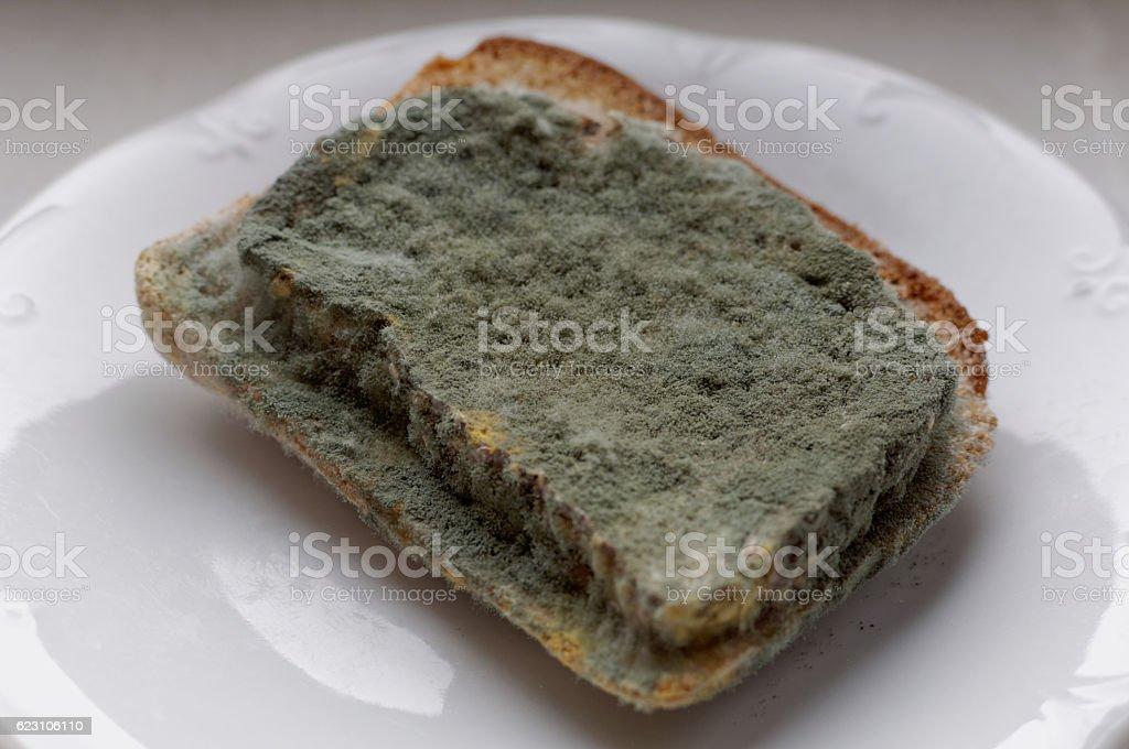 Spleśniałe kromki chleba stock photo