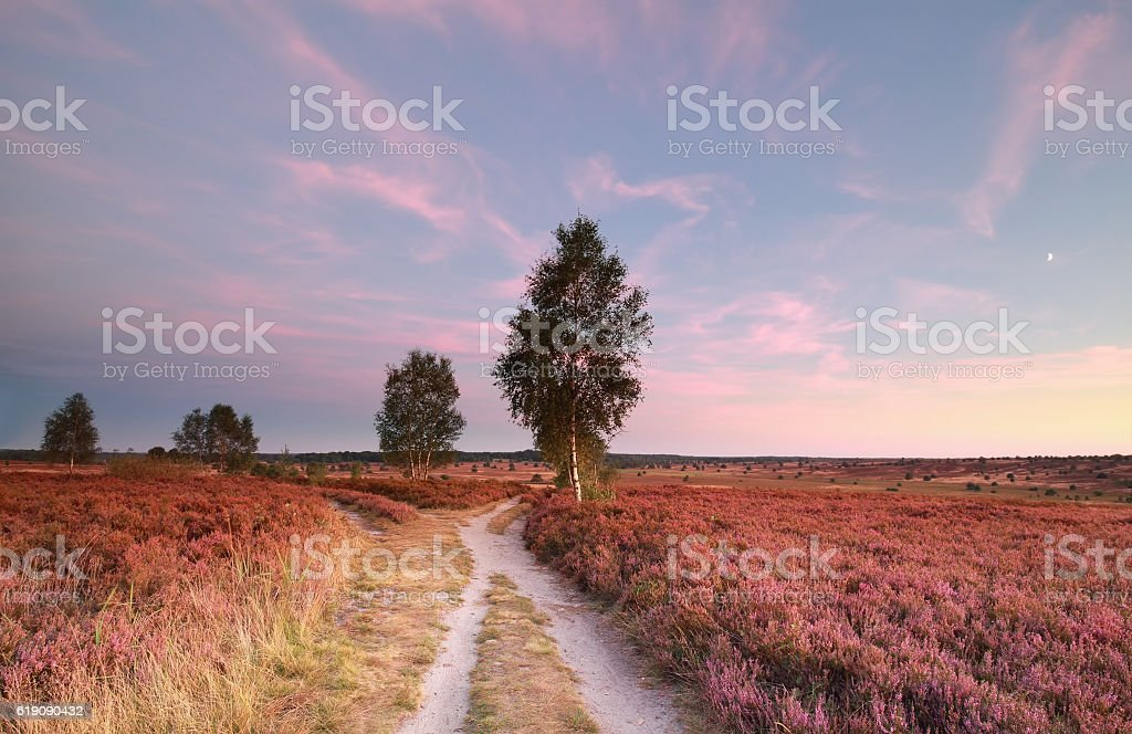 split path at sunset and heather flowers stock photo