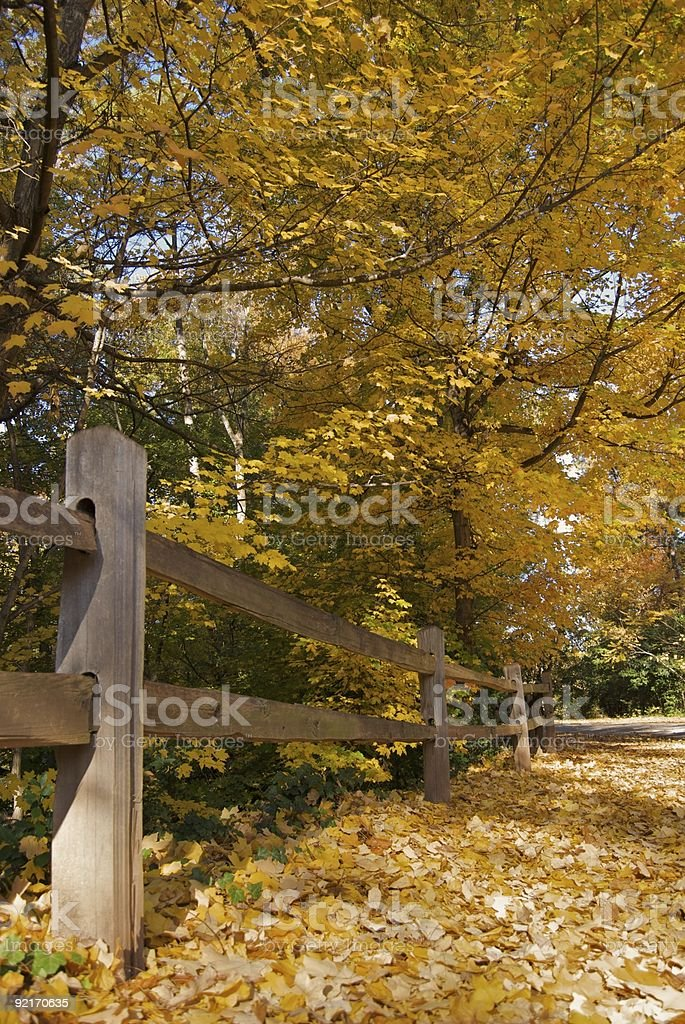 Split Rail Fence and Yellow Autumn Leaves stock photo