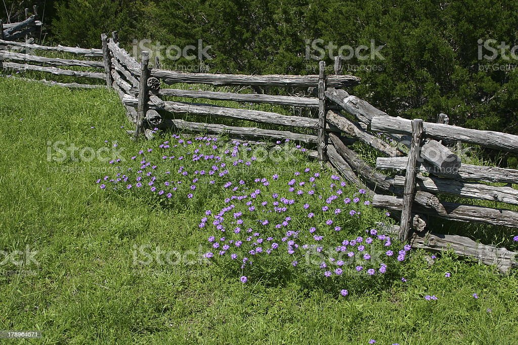 Split rail fence with flowers stock photo