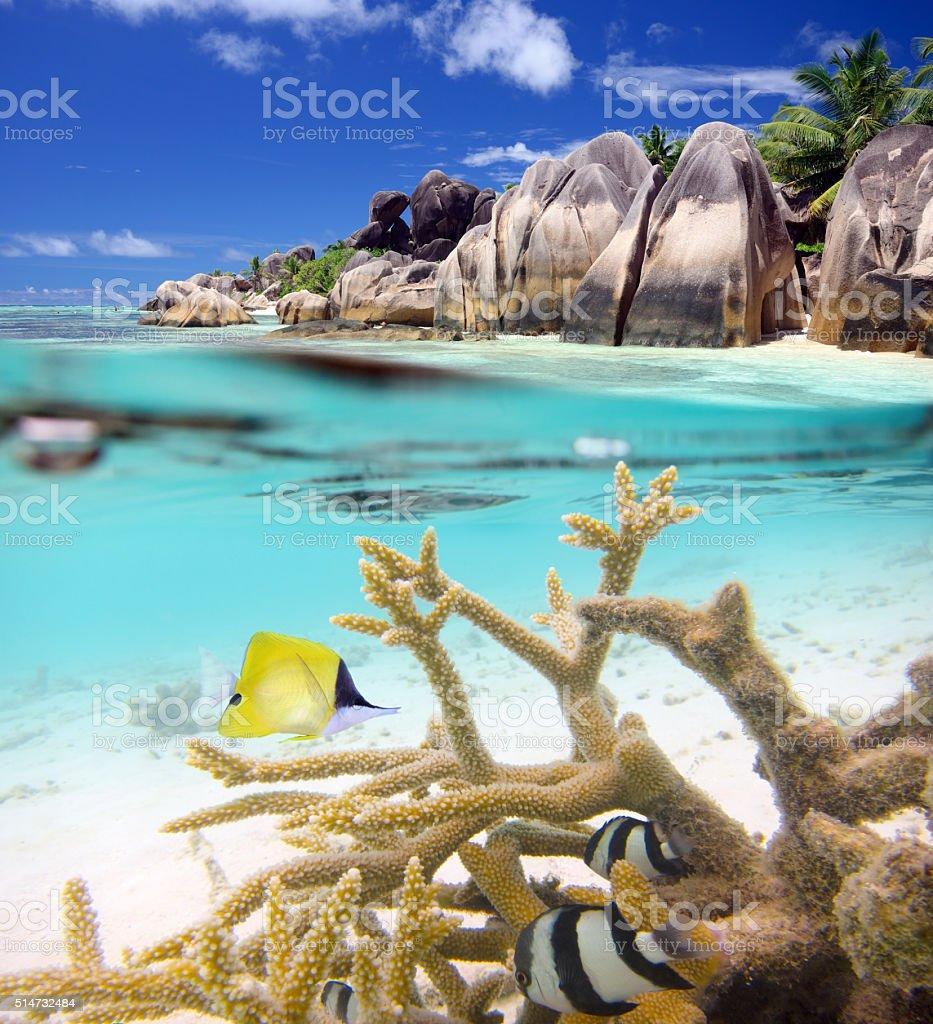 Split shot of tropical paradise stock photo
