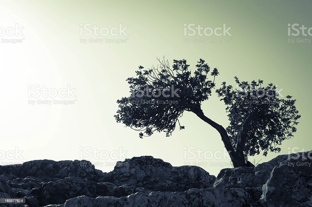 Split tree scenario stock photo