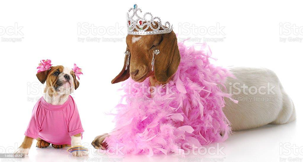 spoiled animals royalty-free stock photo