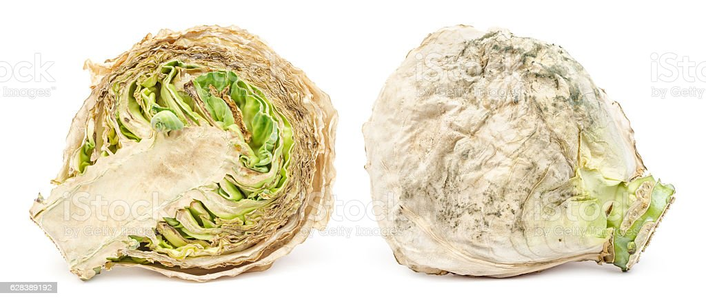 Spoiled rotten cabbage with mold isolated stock photo