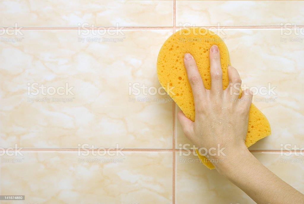 Sponge royalty-free stock photo