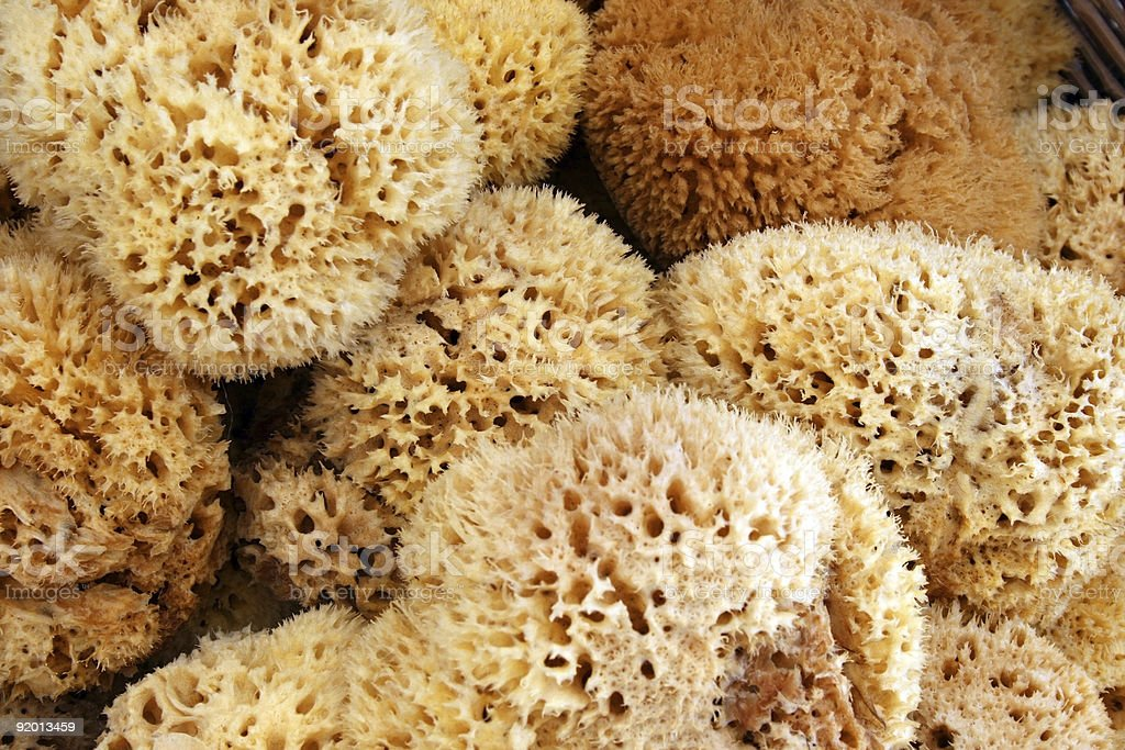 sponges close up royalty-free stock photo