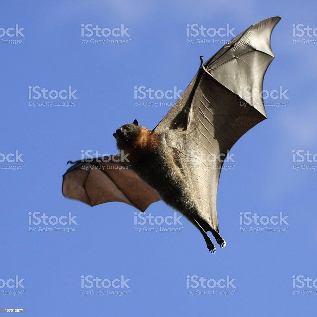 Spooky Bat royalty-free stock photo
