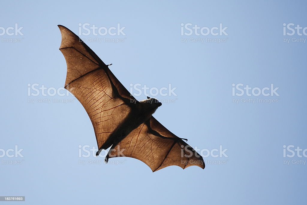 Spooky Bat royalty-free stock photo