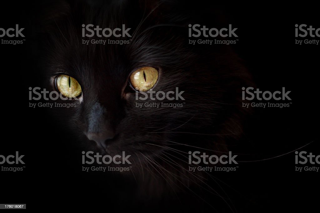 Spooky Black Halloween Cat stock photo