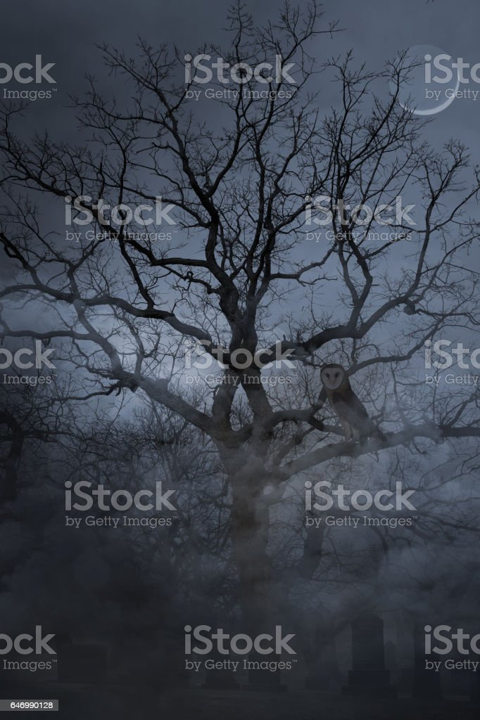 Spooky cemetery and foggy night and Barn Owl stock photo