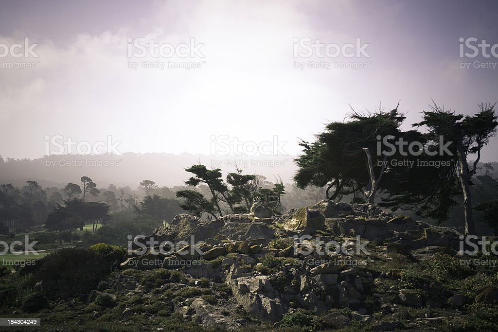 Spooky Cypress Tree stock photo