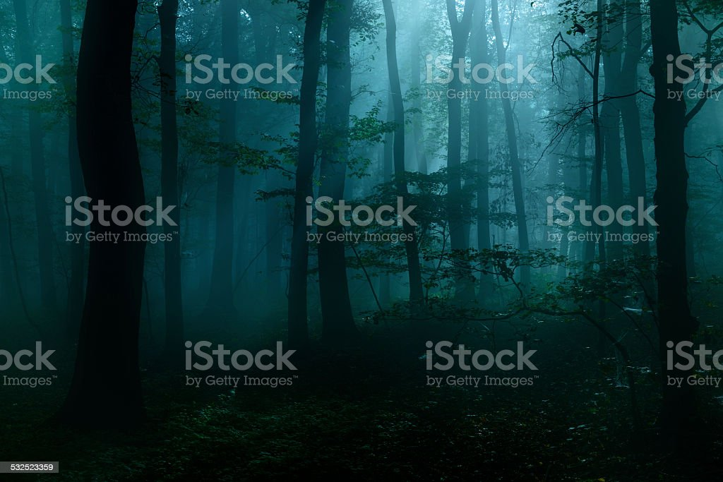 Spooky Dark Forest at Night in Moonlight stock photo