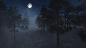 Spooky foggy pine forest in moonlight.