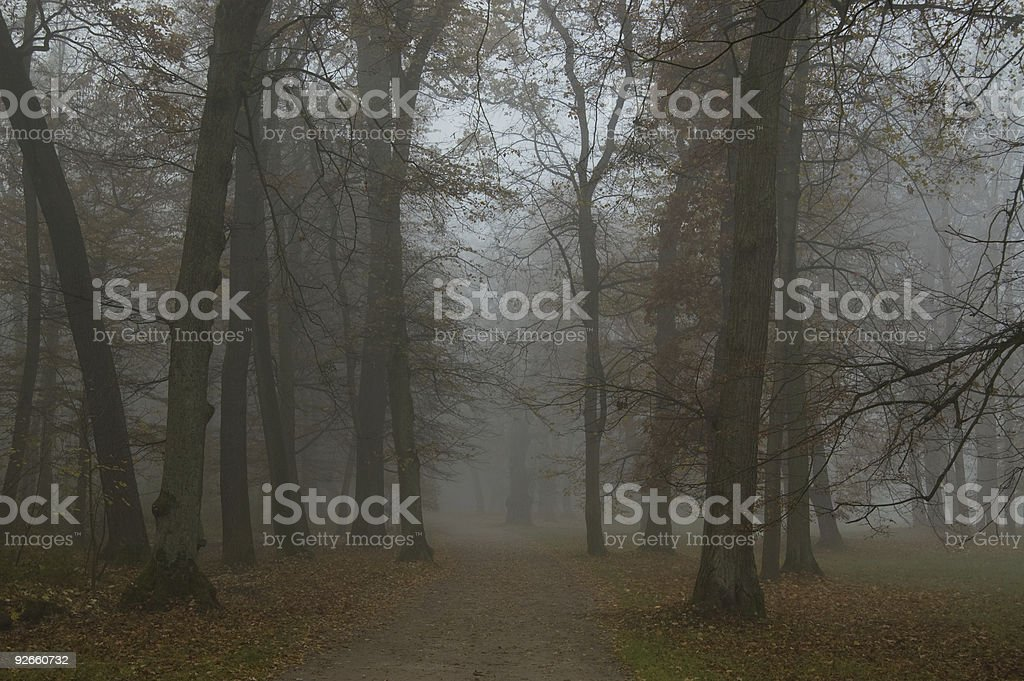 Spooky Forest in Nymphenburg stock photo