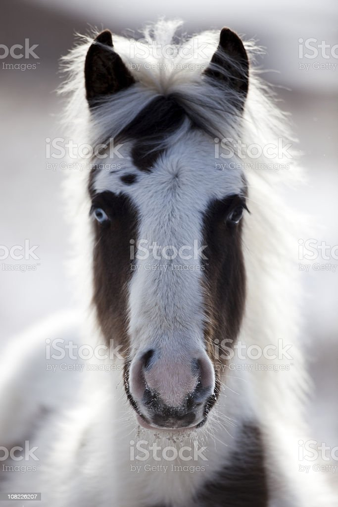 Spooky Horse stock photo