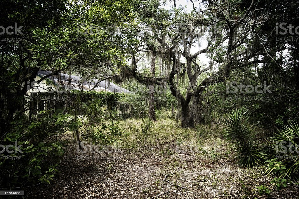 spooky old abandoned home in florida forest stock photo