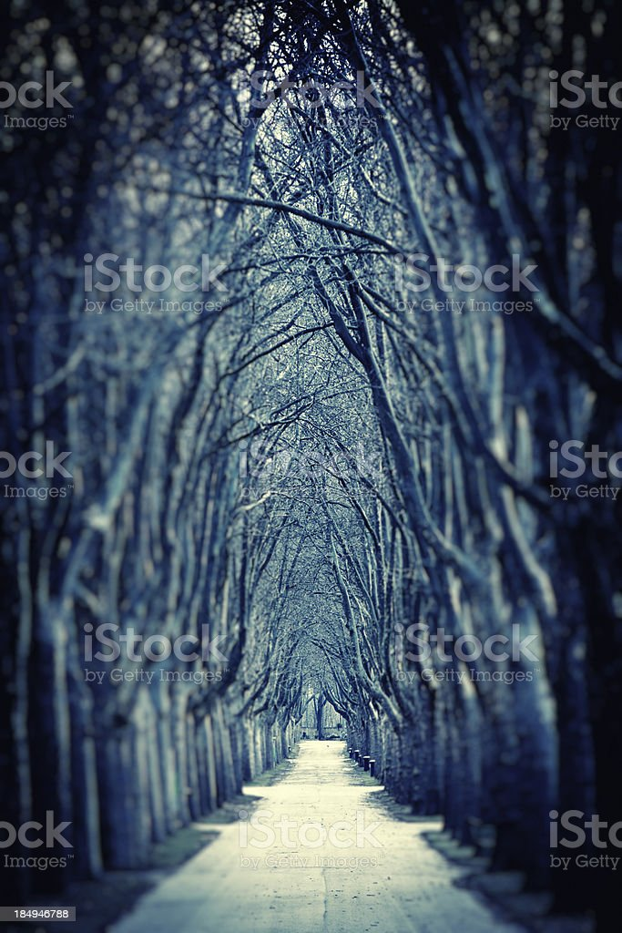 Spooky Road of Bare Trees in Winter royalty-free stock photo