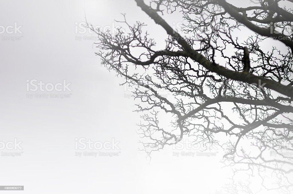 Spooky scene - background stock photo