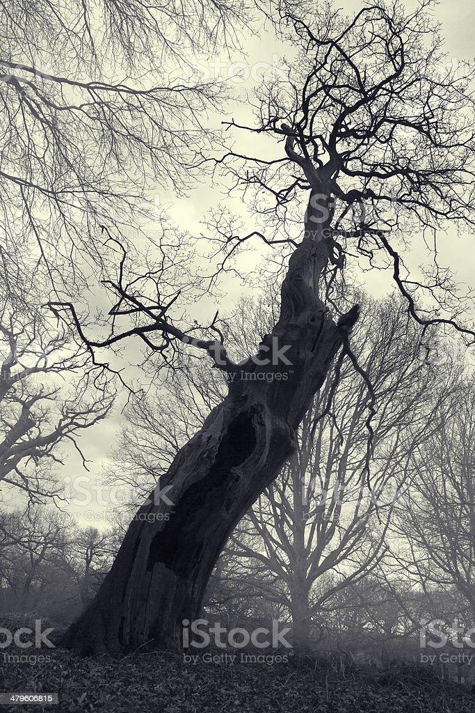 Spooky screaming tree stock photo