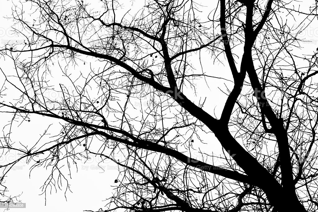 Spooky Silhouette of tree royalty-free stock photo