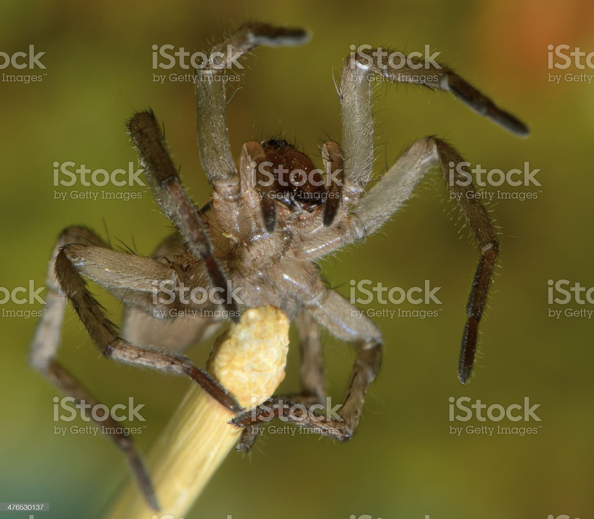 Spooky spider royalty-free stock photo