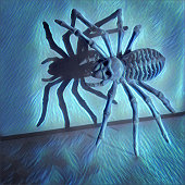 Spooky spider with shadow illustration