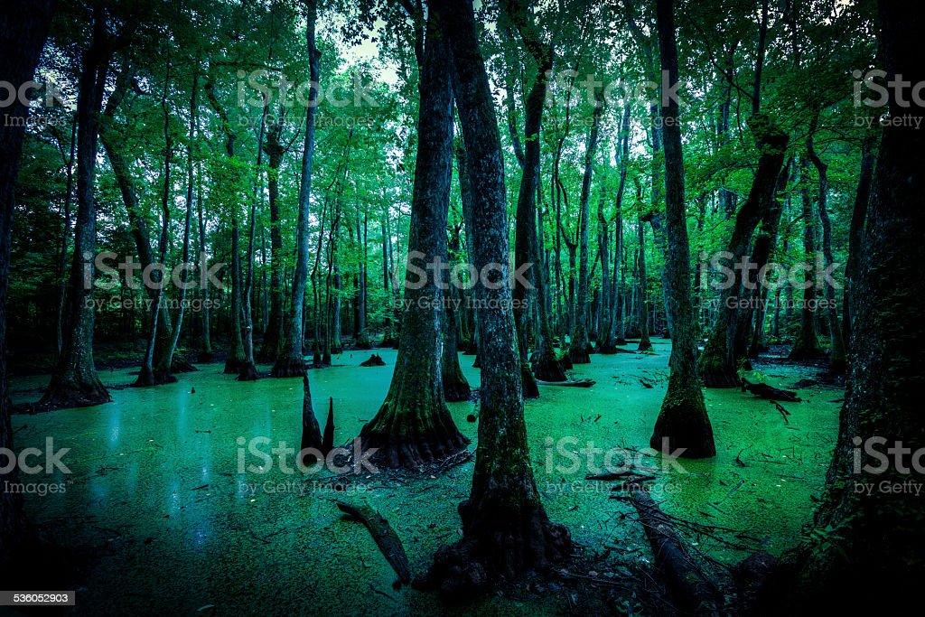 Spooky Swamps in Louisiana, USA stock photo