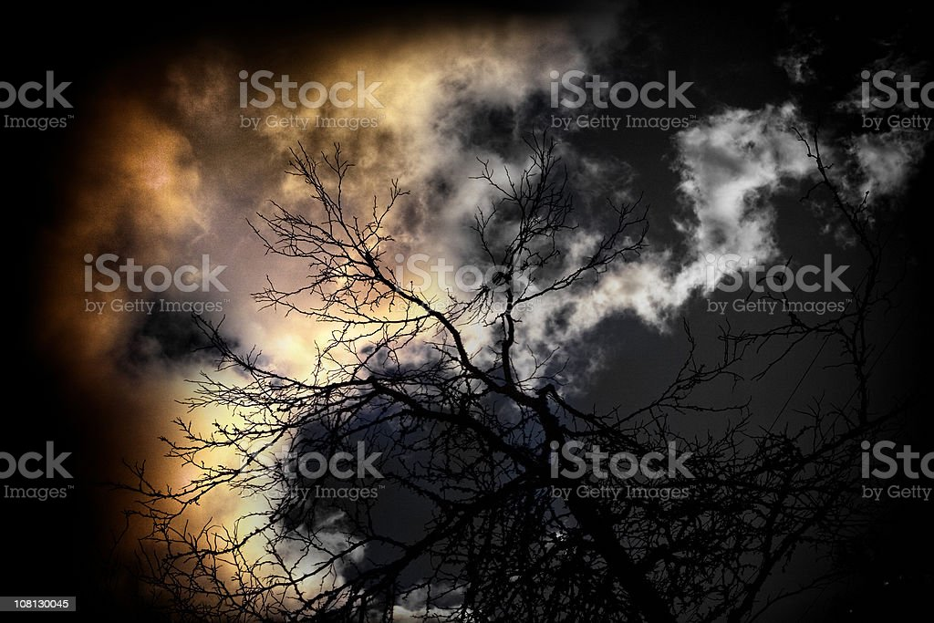 Spooky Tree Branches Against Storm Sky at Night royalty-free stock photo