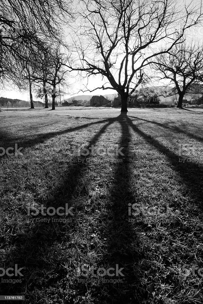 Spooky tree silhouette royalty-free stock photo
