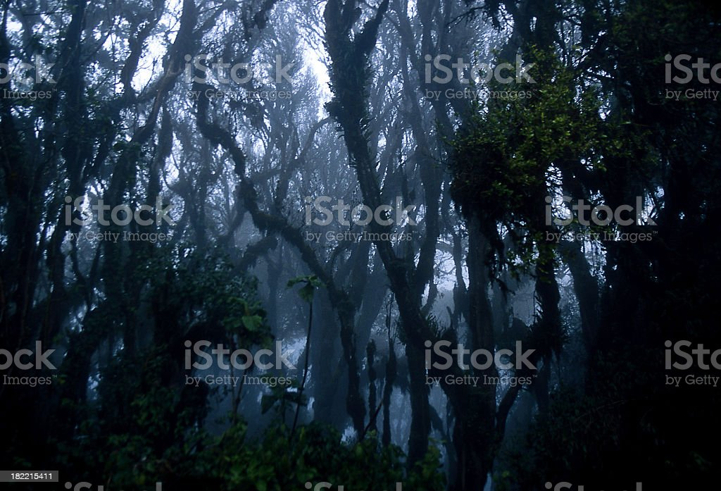Spooky Trees in African Jungle royalty-free stock photo