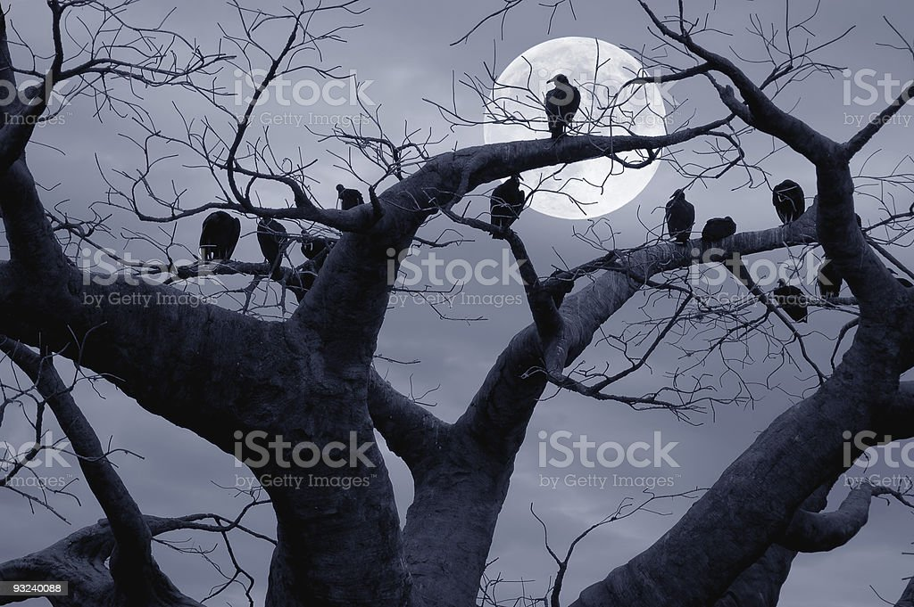 Spooky Vultures royalty-free stock photo