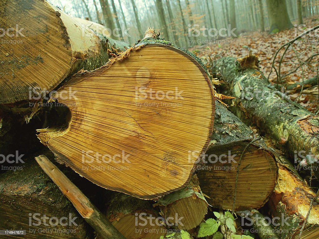 spooky wood face royalty-free stock photo