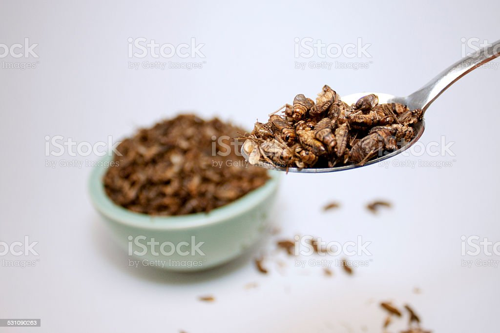 Spoonful fo Crickets stock photo