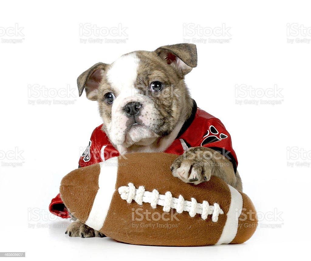 sports hound stock photo