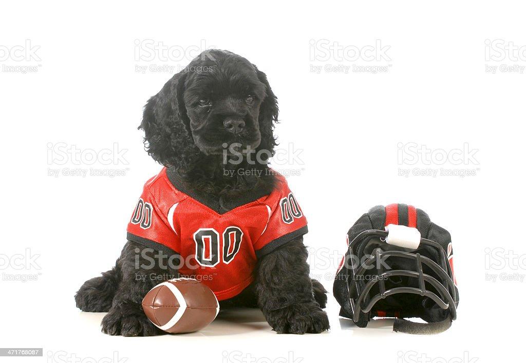 sports hound royalty-free stock photo