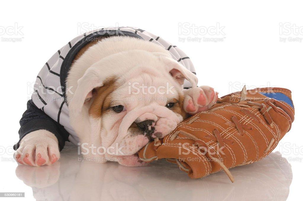 sports puppy stock photo