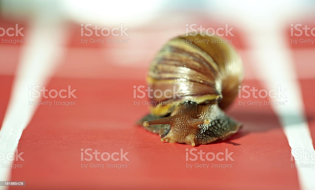 Sporty snail royalty-free stock photo