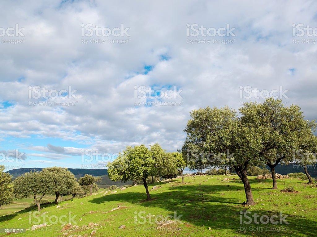 Spot and reservoir Cijara province of Badajoz, Spain. stock photo