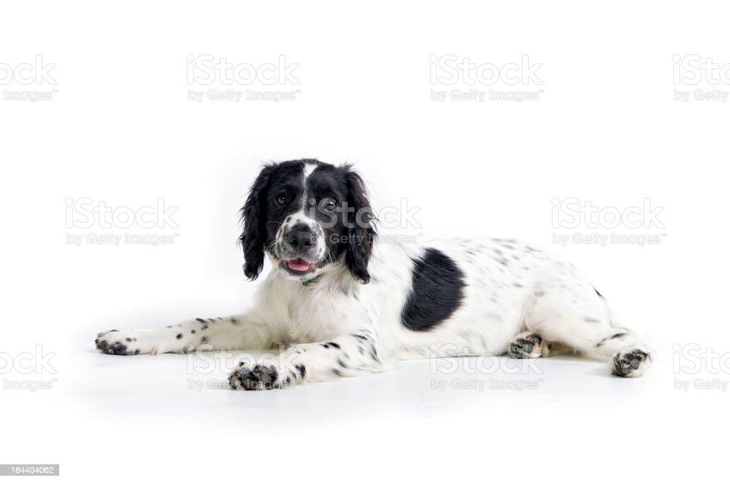 spot the dog stock photo