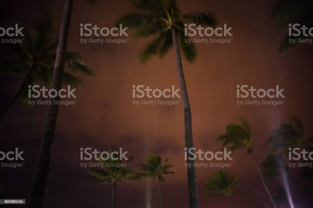 Spotlights light up the night sky and swaying palm trees in Kahului, Hawii. stock photo