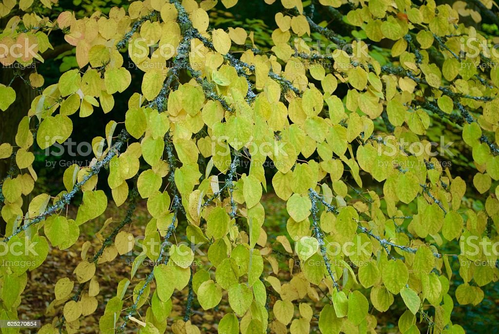 Spotted Leaves stock photo