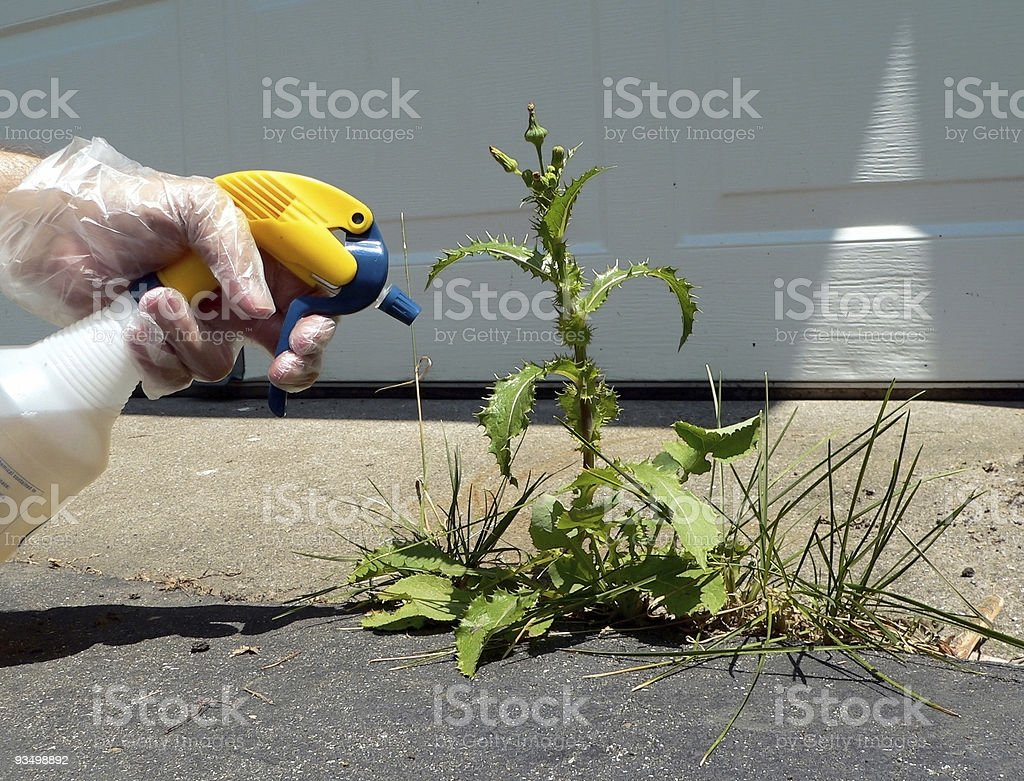 Spraying a Weed stock photo