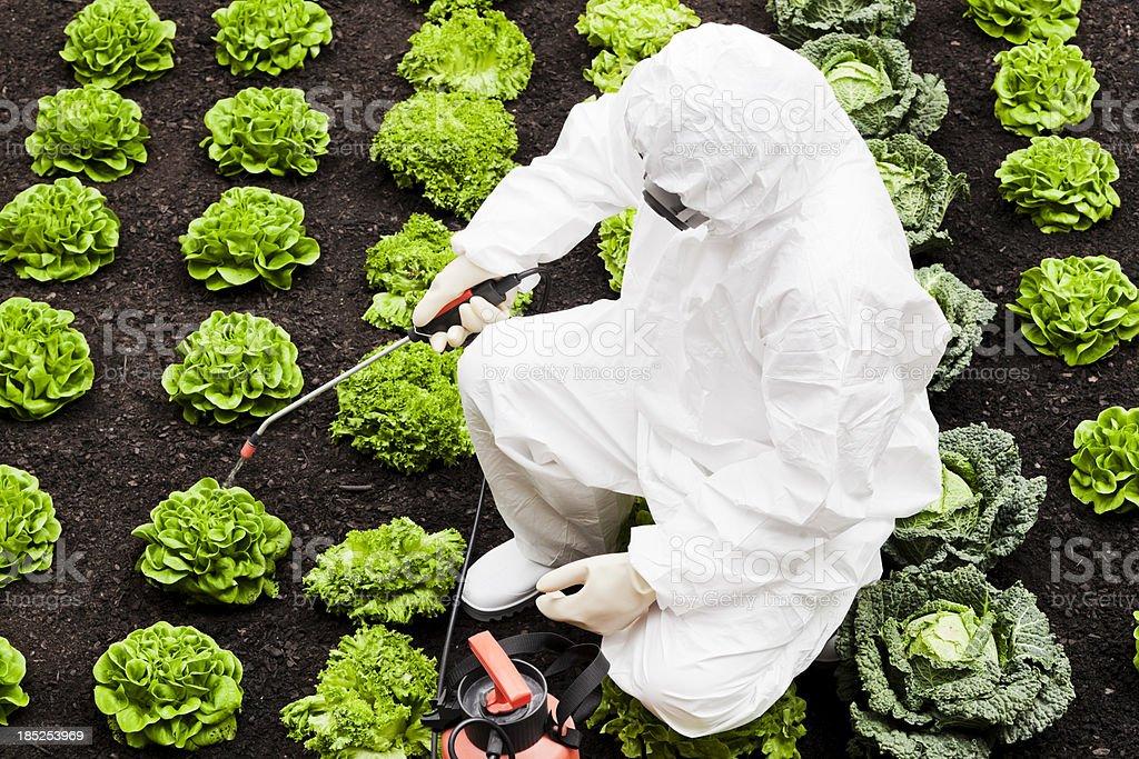 Spraying field stock photo
