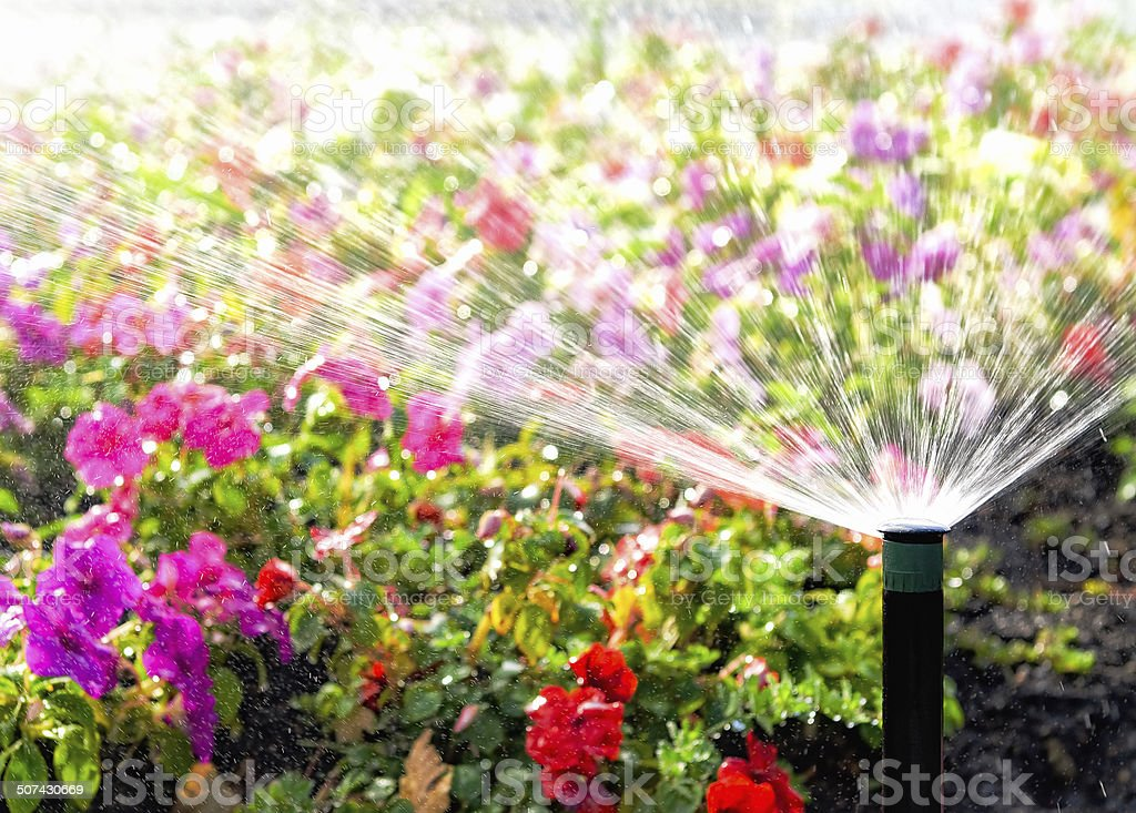 Spraying Flowers with Water stock photo