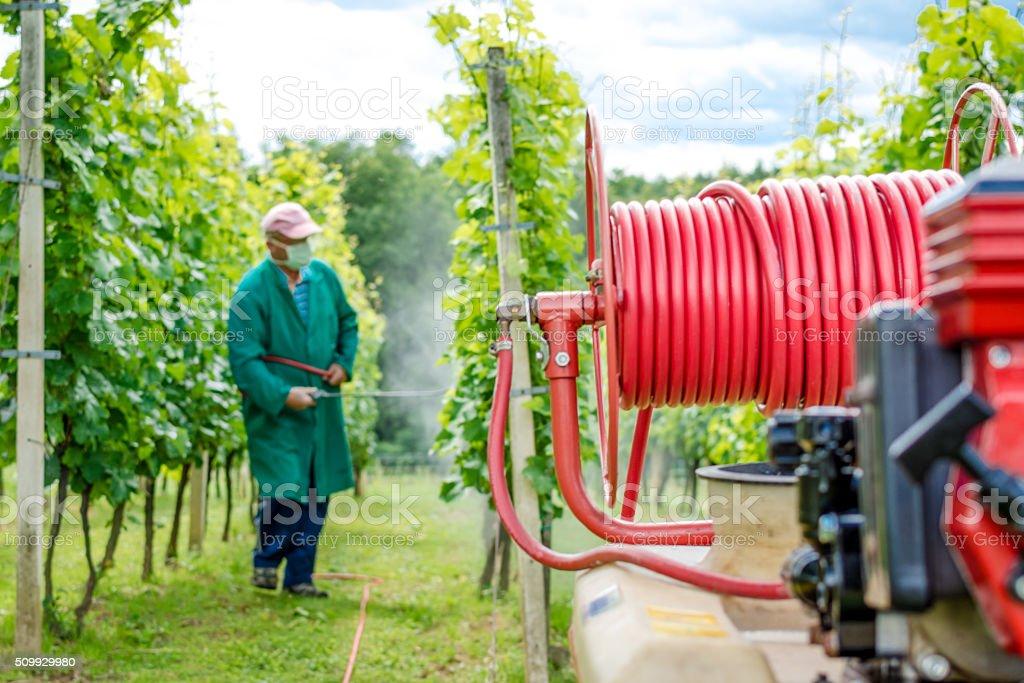 Spraying grapes stock photo